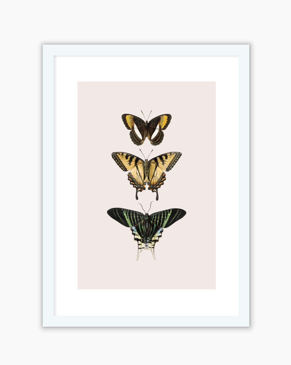 Quadro Vintage Butterfly