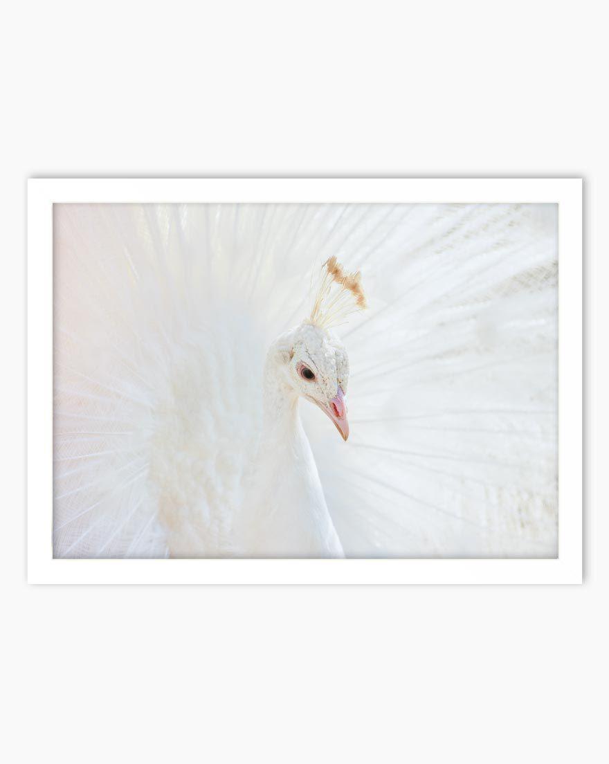 Quadro White Animal - Horizontal