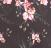 Botânica fundo preto