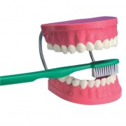 Arcada Dentária