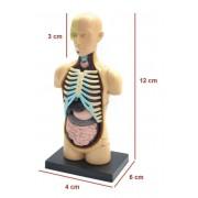 Kit Torso Humano 32 peças 14 cm