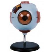 Olho Humano Desmontável