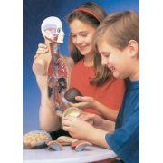 Torso humano – 11 partes auto encaixáveis inquebrável, c/ manual alt. 50cm