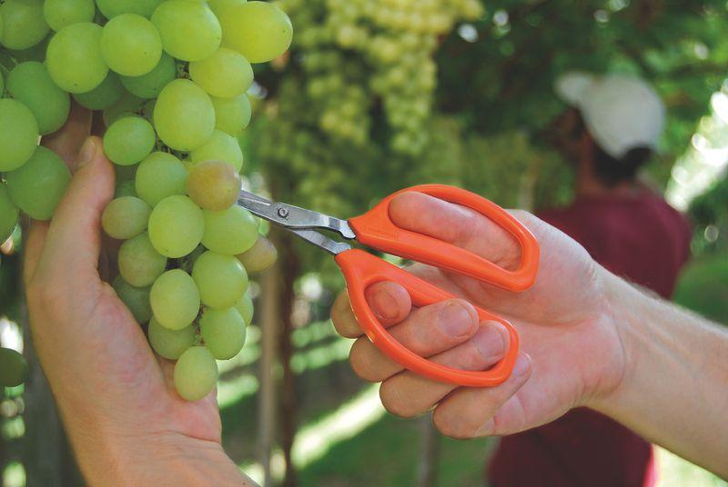 Tesoura Para Frutas Tramontina