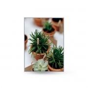 Quadro Decor Coleção Mini Cactus e Flores A