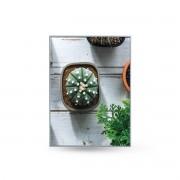 Quadro Decor Coleção Mini Cactus e Flores B