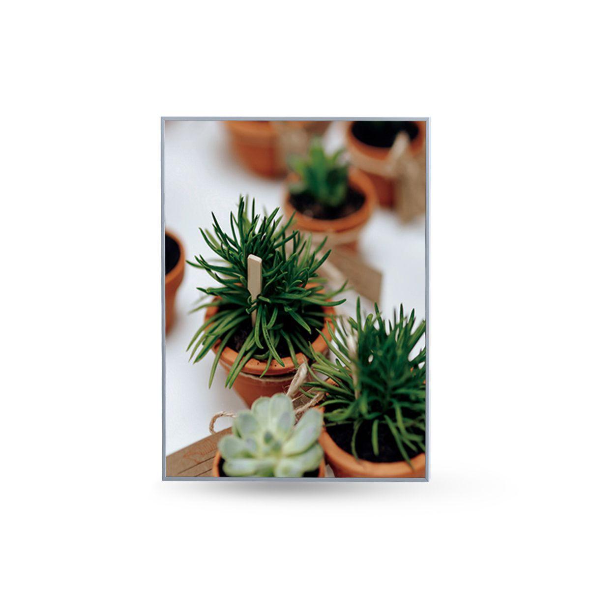 Quadro Decor Kit Coleção Mini Cactus e Flores