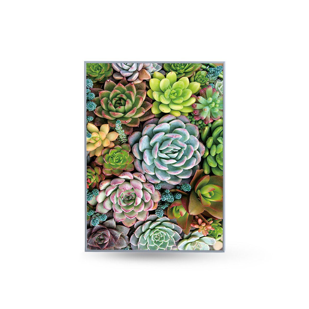 Quadro Decor Coleção Mini Cactus e Flores C