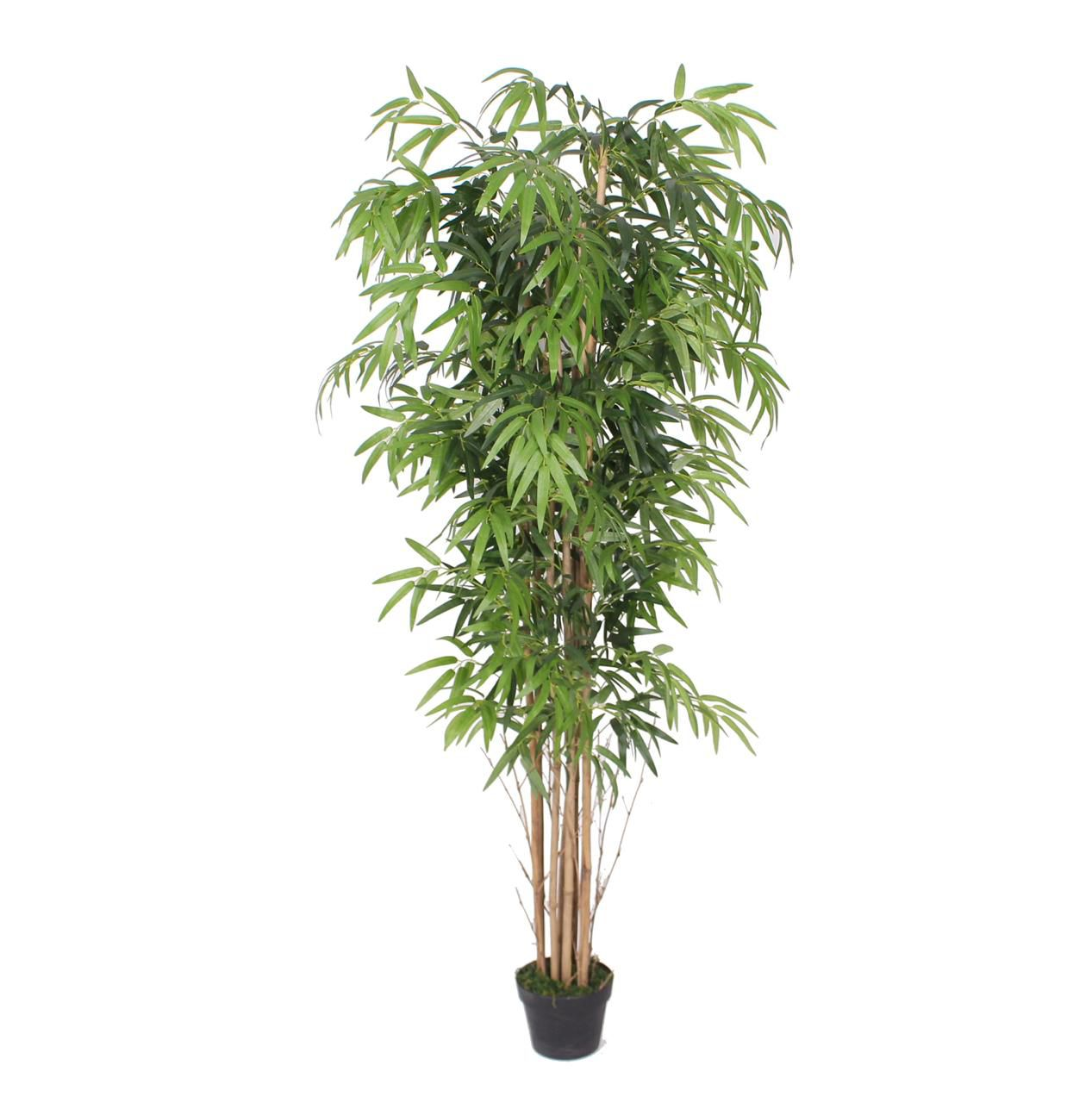 Planta Bambu Caule Natural Permanente 1,80 cm