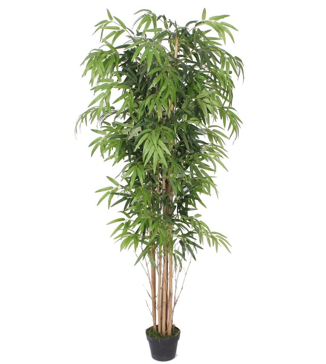 Planta Bambu Caule Natural Permanente 1,80 cm