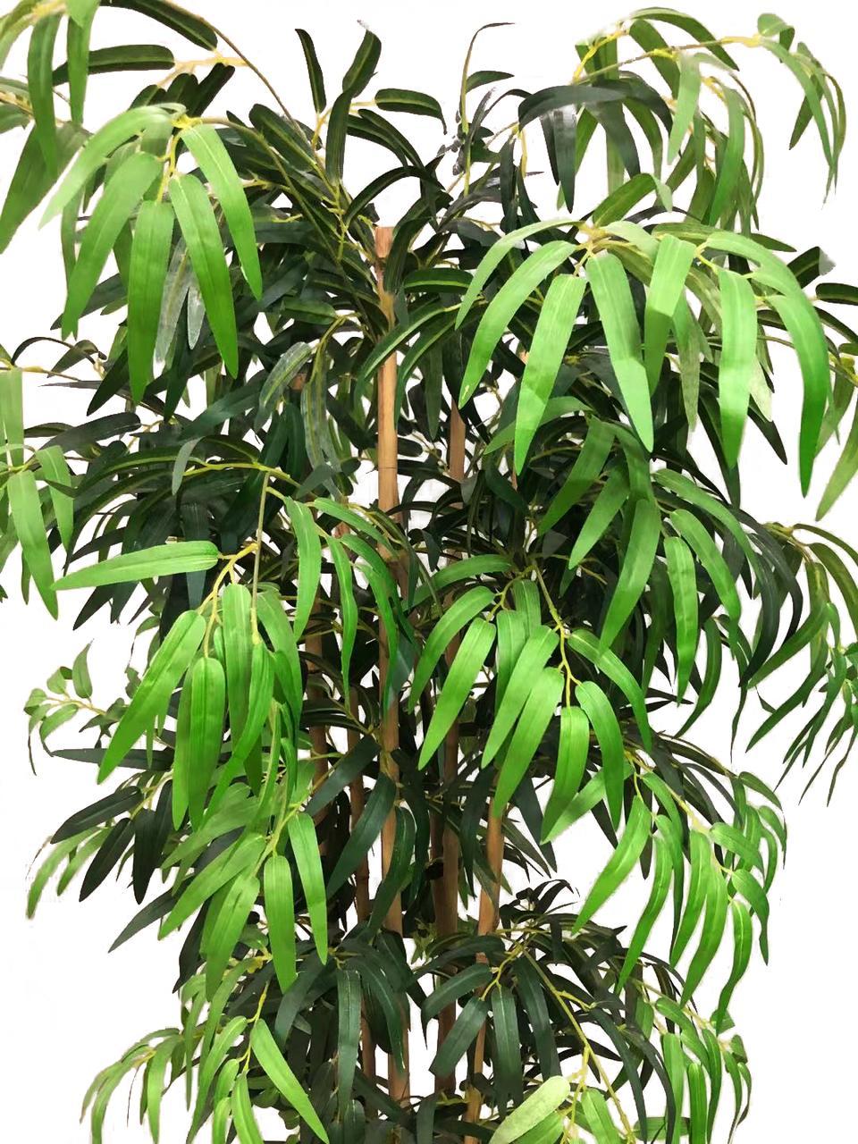Planta Bambu Caule Natural Permanente 2,10cm