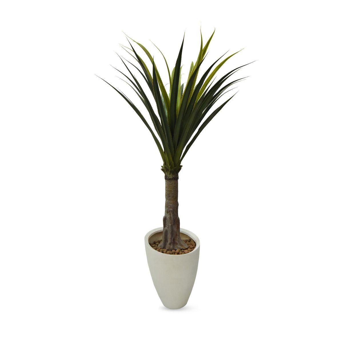 Planta Palmeira Permanente Yuca