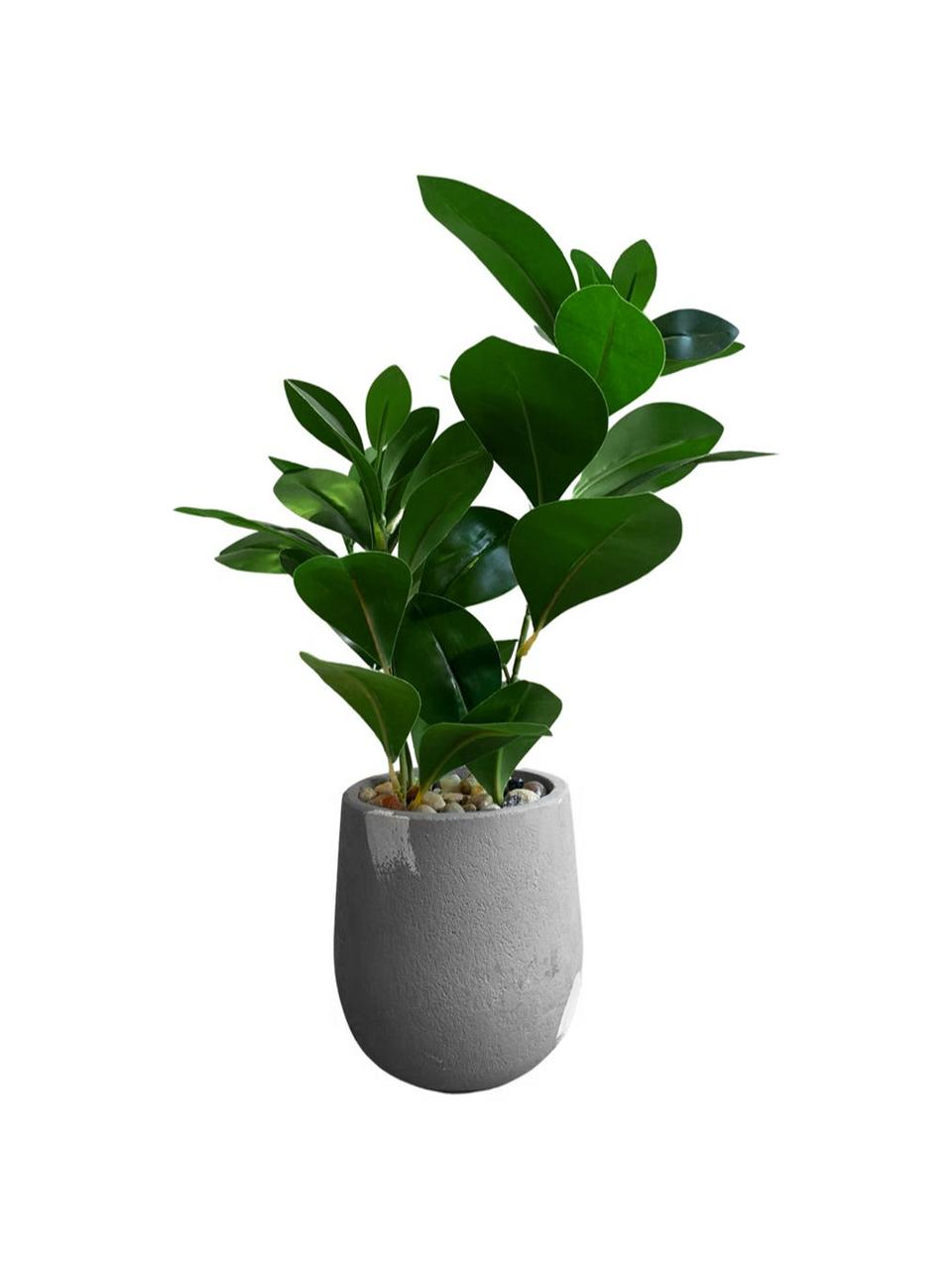 Planta Artificial  Clusia Real