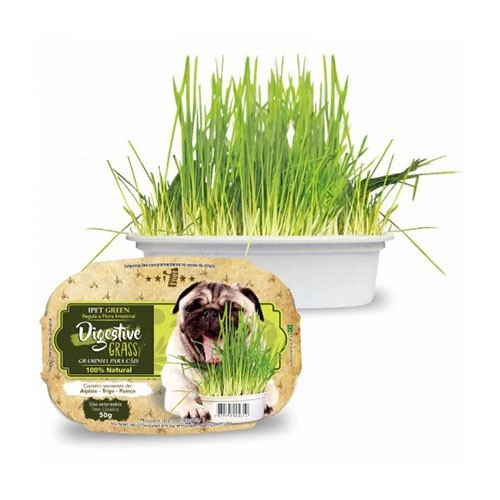 Graminha Ipet Green Digestive Grass para Cães - 60g