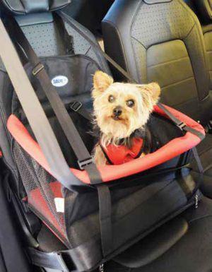 Transpet Assento para Cães e Gatos Tubline