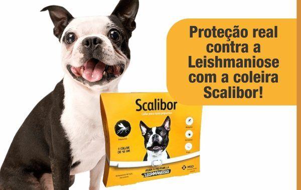 Coleira Scalibor P E M 48cm Leishmaniose Antipulgas carrapatos moscas e flebotomineos