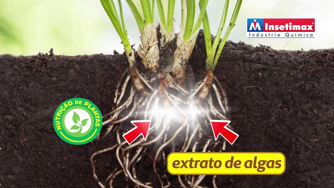 Fertilizante adubo enraizador concentrado para plantas