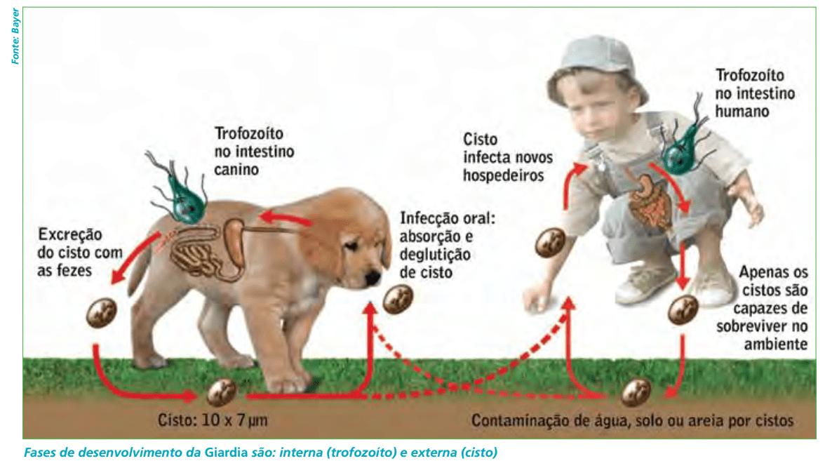 Giardicid 500mg  5 Comp. Cepav Giardíase Cães E Gatos