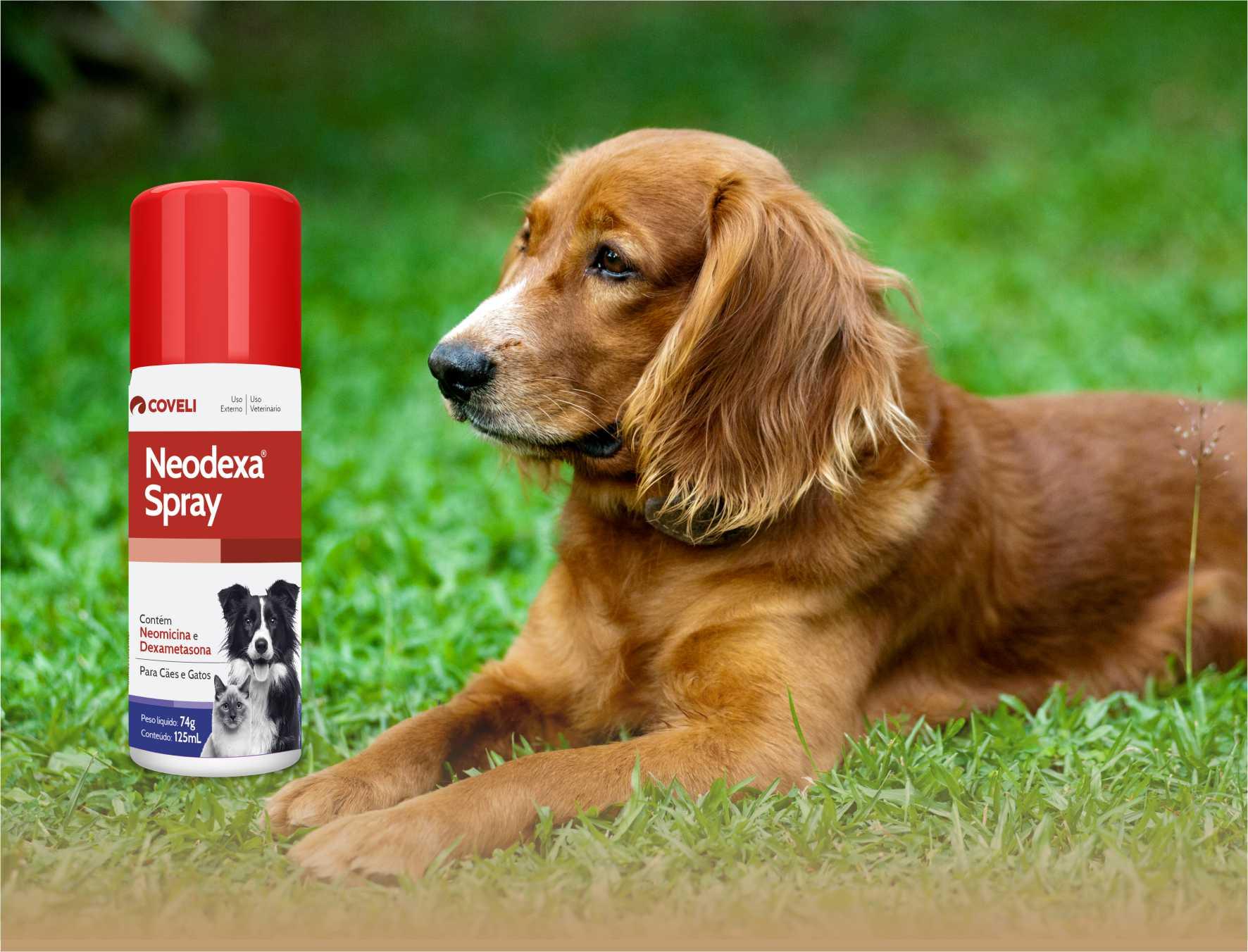 Neodexa Antibiótico Spray Ferimentos Para Cães Gatos 125 Ml