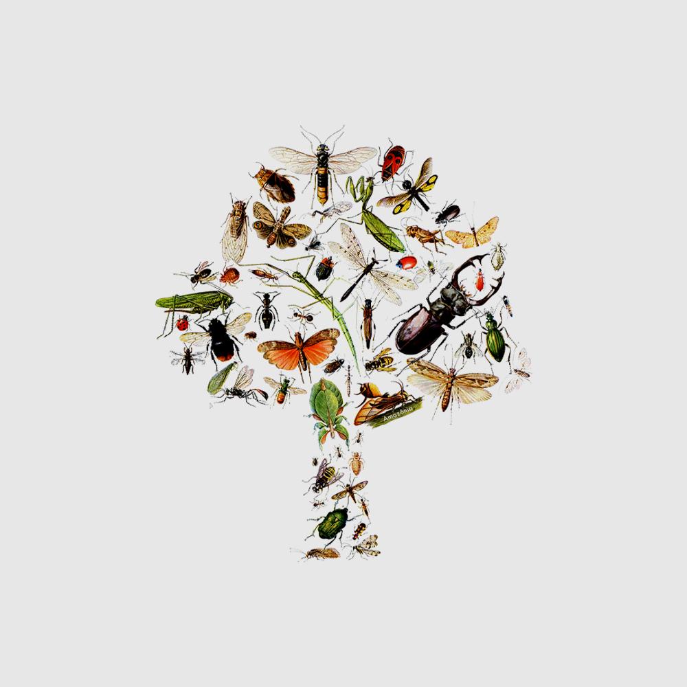 Camiseta Amazônia Entomologia - Branco