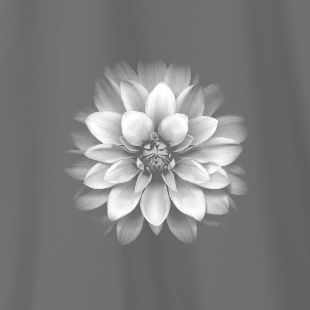 Camiseta Amazônia Flor Origens - Cinza Escuro