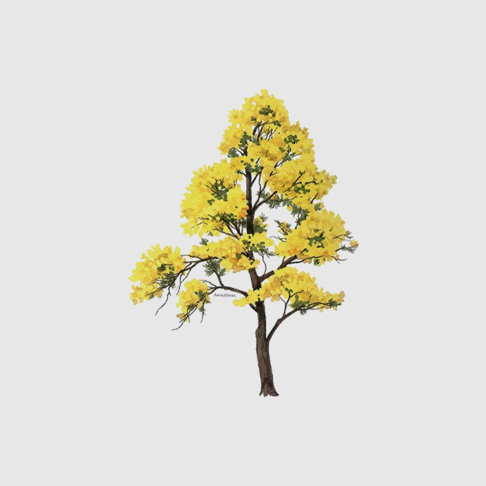 Camiseta Amazônia Ipê Amarelo - Branco