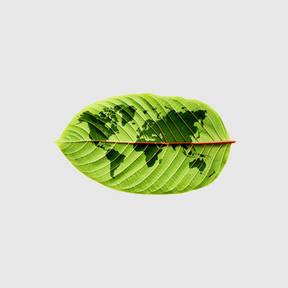 Camiseta Amazônia Mundo Folha - Mescla Claro