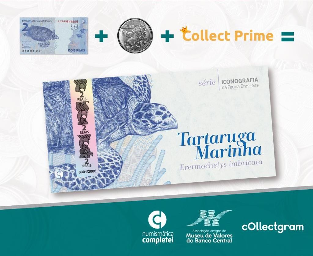 Folder Tartaruga Marinha