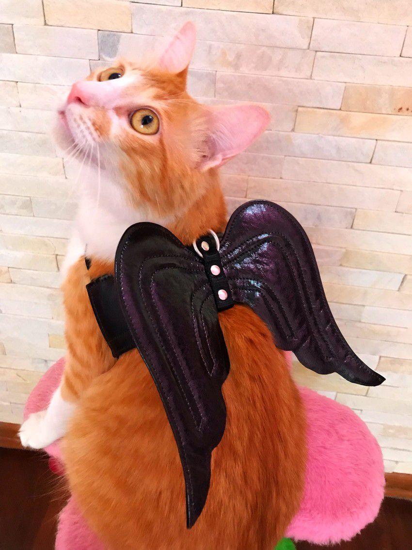 Coleira Angelcat