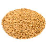 Semente de Mostarda em Grãos (Brassica) - 90 gramas