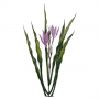Flor de Capim - Unidade