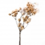 Haste Bougainville Branca desidratada - Flores Secas - Un