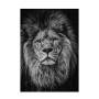 Quadro Coleção Fauna - Lion Face P&B
