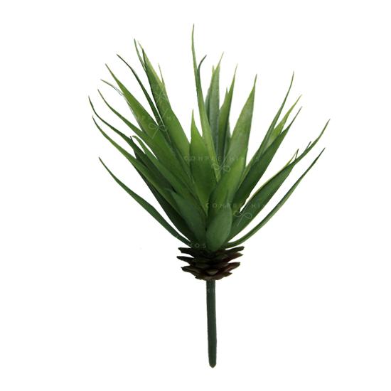 Plantinha  Suculenta Aloe Vera - Unidade