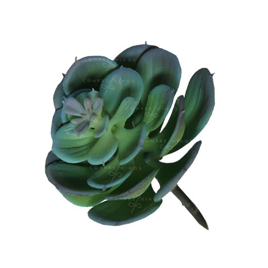 Plantinha Suculenta Echeveria - Unidade