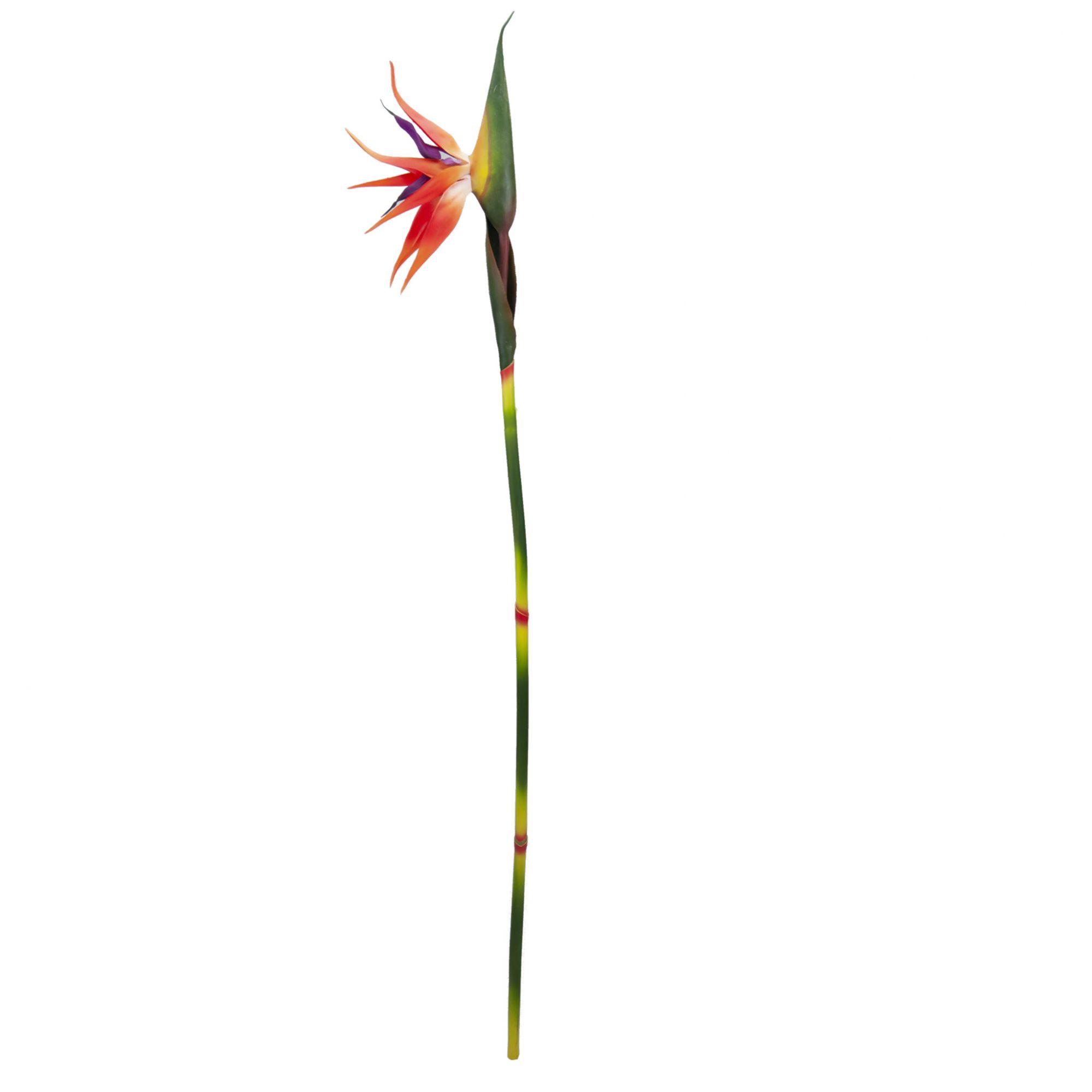 Helicônia Estrelícia (Ave do paraíso) 90 cm