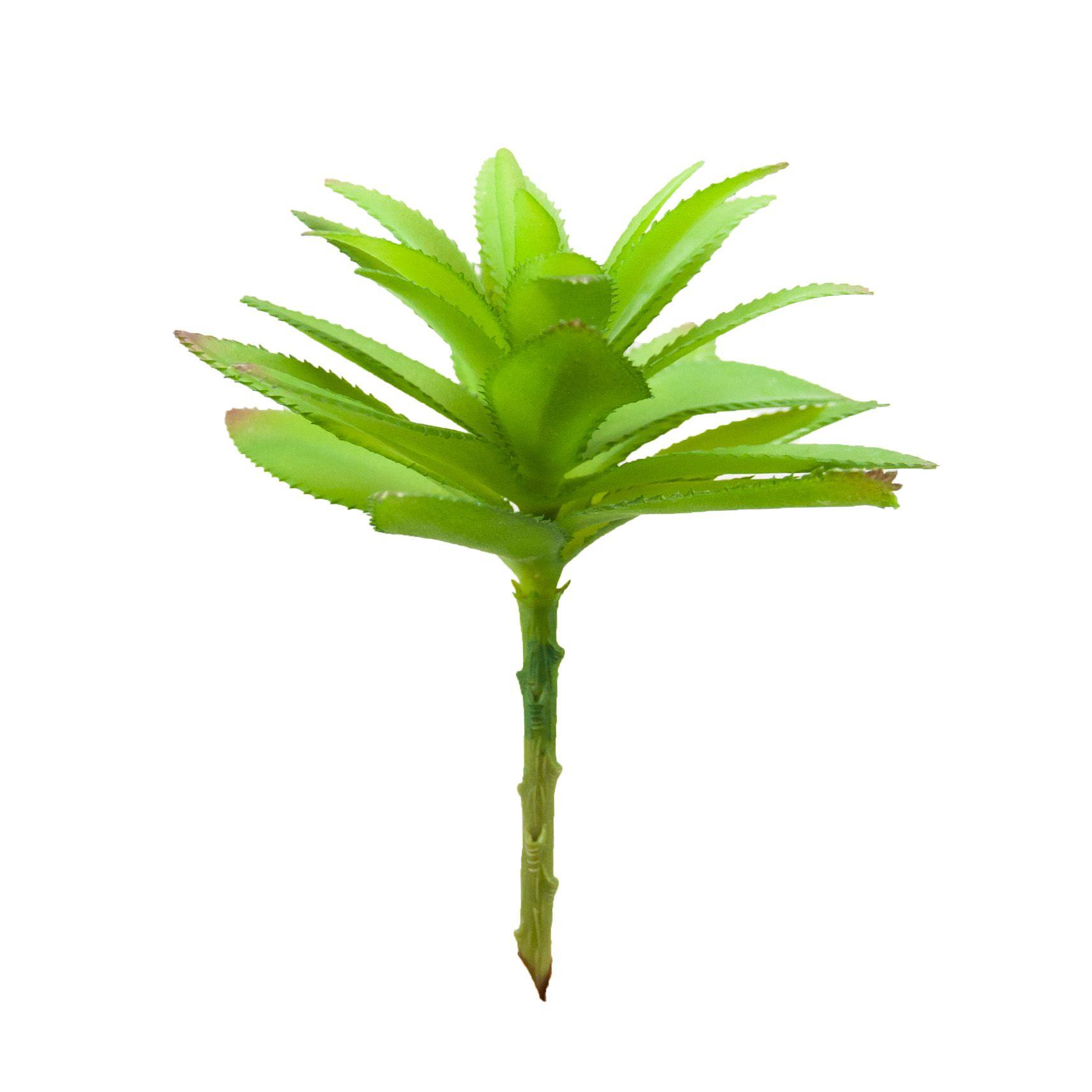 Suculenta Folha de Abacaxi 20 cm