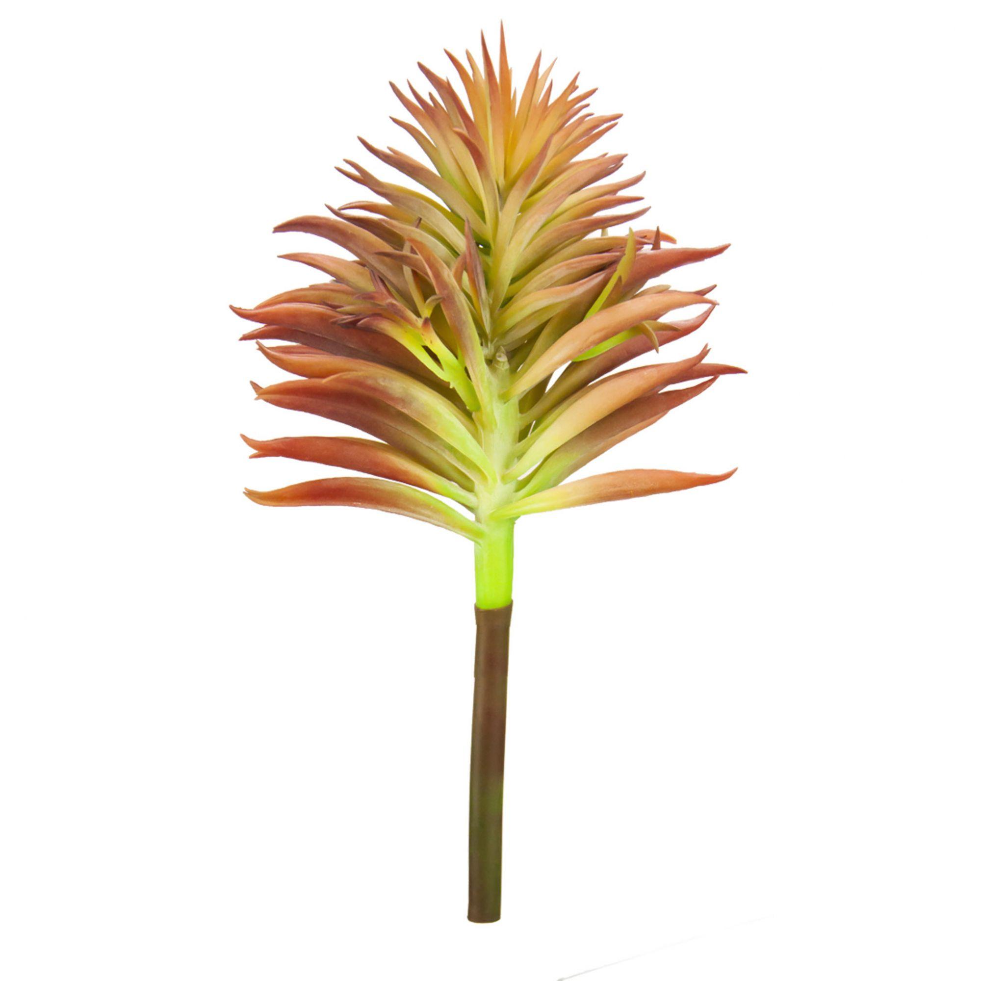 Suculenta Pinho 20 cm