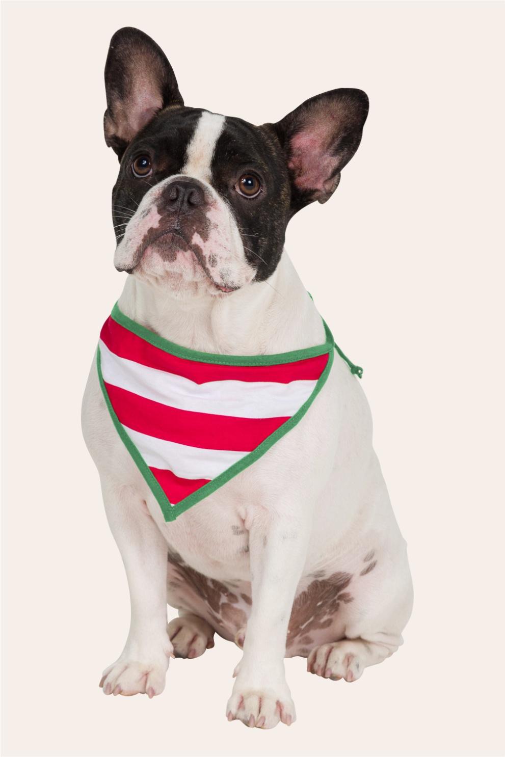047/H - Bandana Pet Merry Christmas