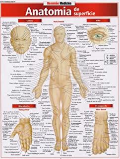 Anatomia De Superficie Resumao