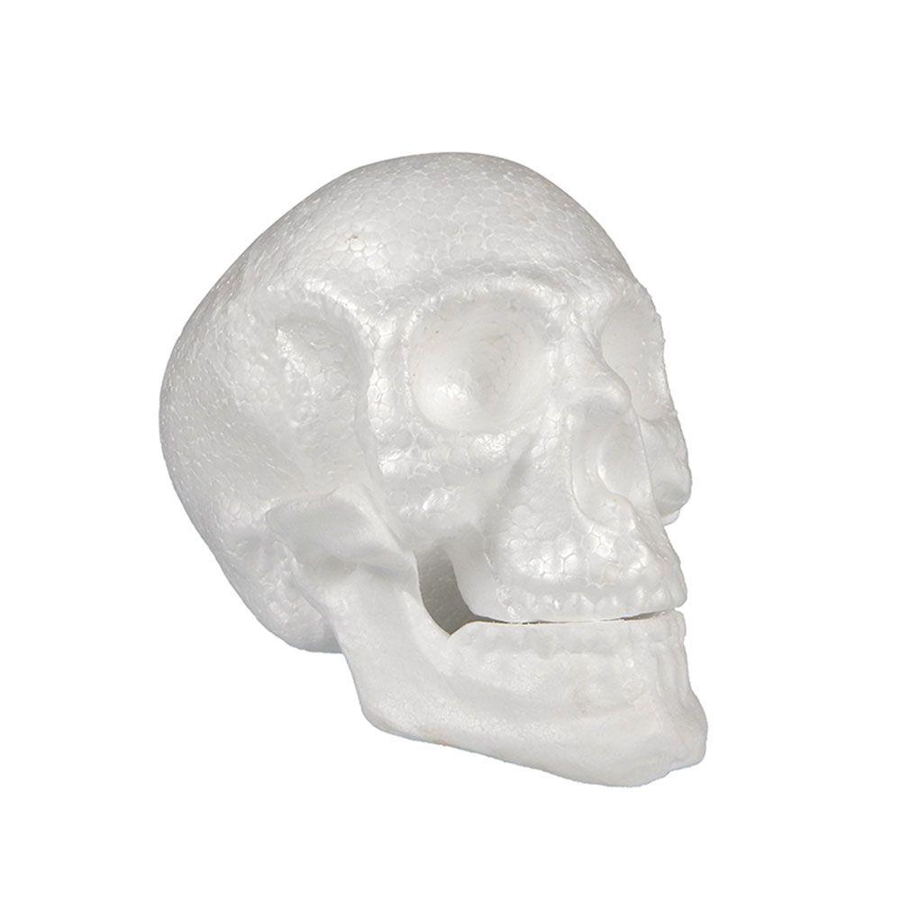 Crânio com Mandíbula em Isopor