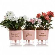 Conjunto 3 Vasos Autoirrigáveis P - Flor e Amor - Cor Rosa - Vasos Raiz