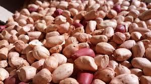 Amendoim Paraguaio Orgânico - 500g - Vale Ecológico