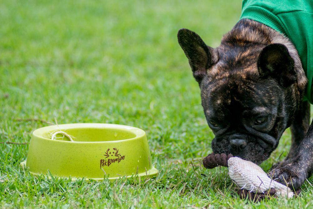 Bebedouro e Comedouro Biodegradável Para Cachorro - M - PetBamboo