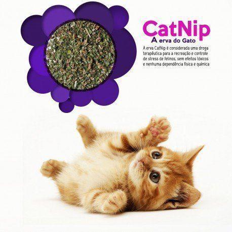 Erva do gato Catnip - Petlon