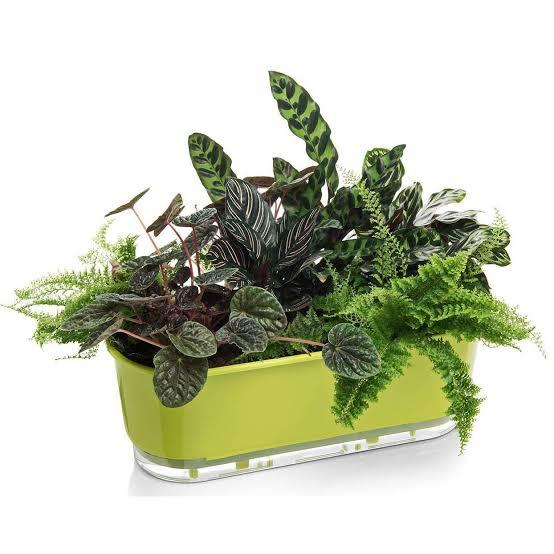 Jardineira Auto Irrigável 40cm - Cor Verde - Raiz