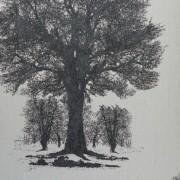 Papel de Parede Enchantment 121805 árvores