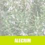 Essência concentrada 100ml Alecrim LL