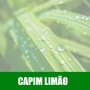 Essência Concentrada 100ml Capim Limão
