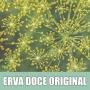 Essência Concentrada 100ml Erva Doce Original